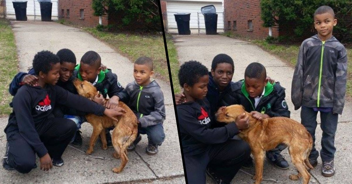 4 Young Boys Rescue Starving, Abandoned Dog Tied to House With ...