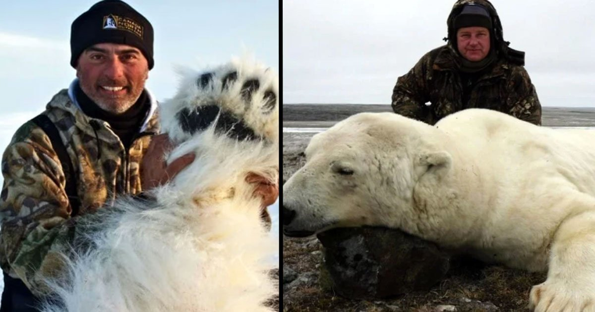 Polar Bear Hunters Pose With Kills and Encourage More to Take Part