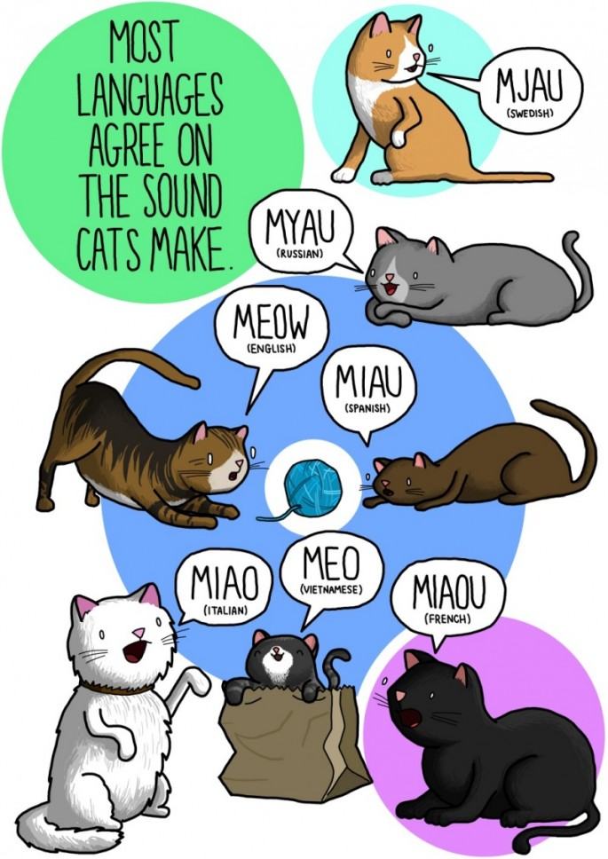 Animal Sounds in Different Languages - Cat 1