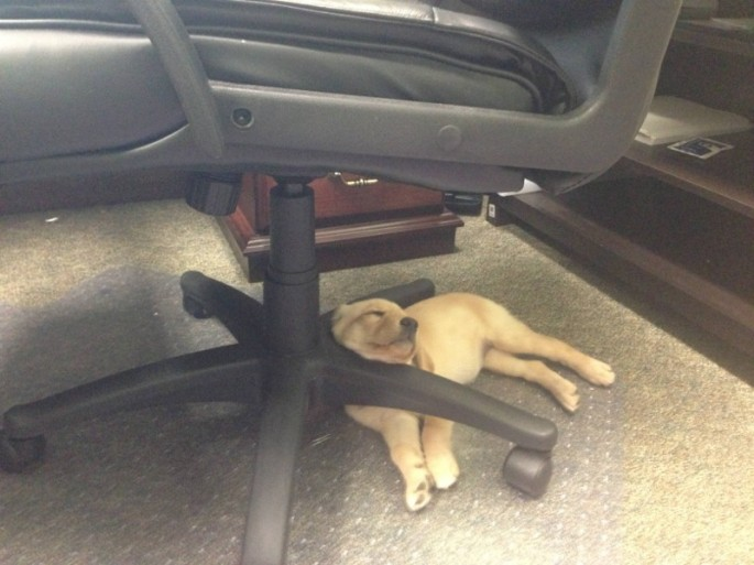Awkward Puppy Nap Positions - 17