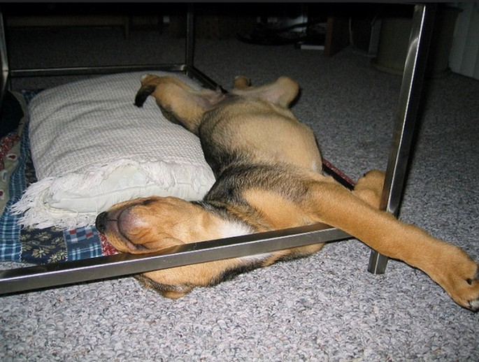Awkward Puppy Nap Positions - 20