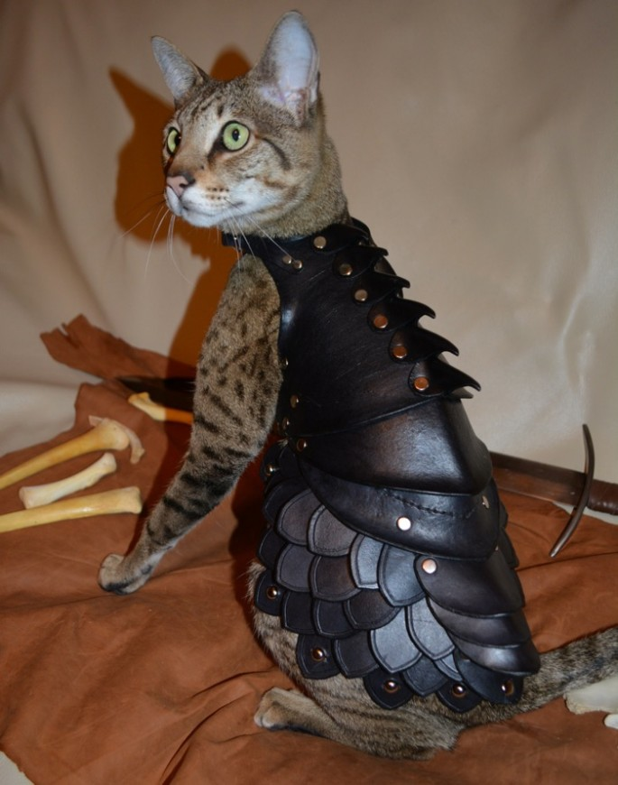 Battle Armor for Cats - 01