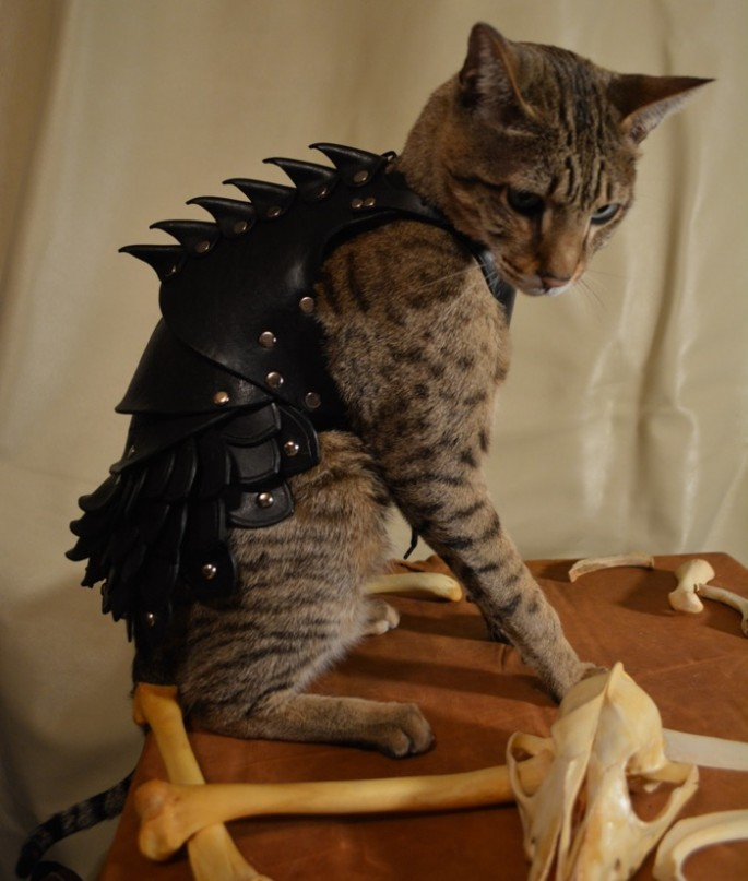 Battle Armor for Cats - 02
