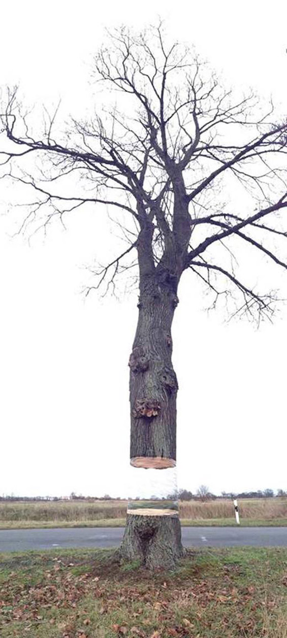 Bisected Tree - 03