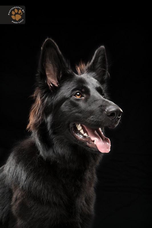 Black Dogs 01