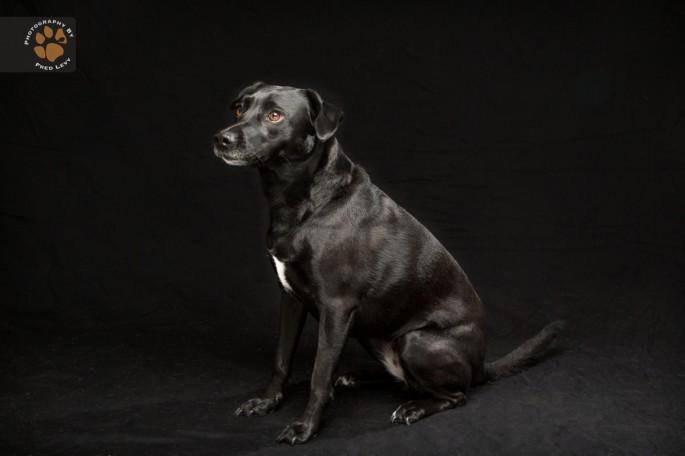 Black Dogs 02