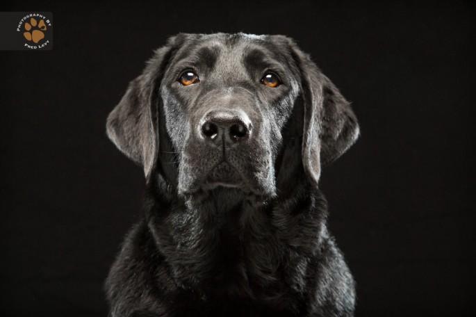 Black Dogs 03