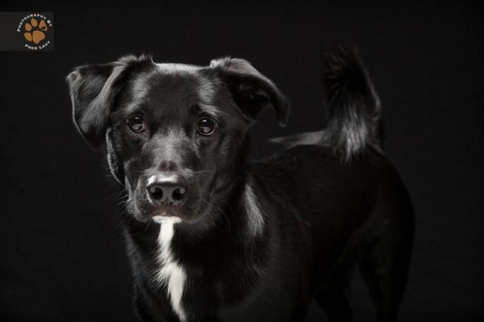 Black Dogs 04