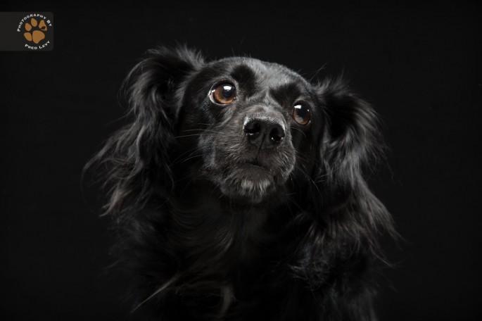 Black Dogs 05