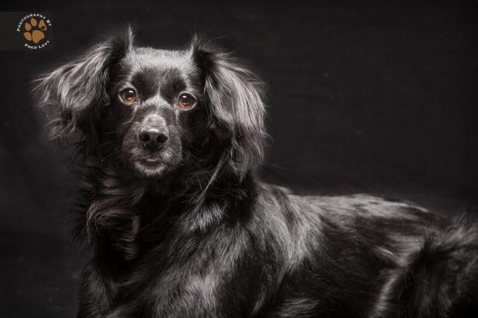 Black Dogs 06