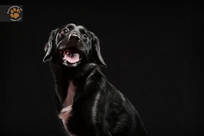 Black Dogs 11