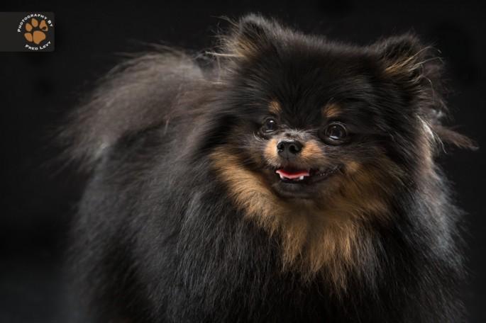 Black Dogs 13