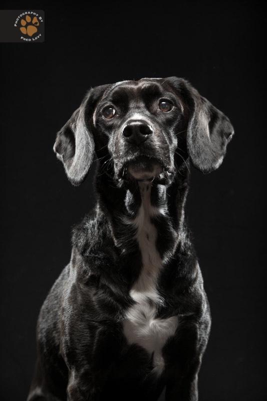 Black Dogs 14