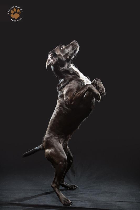 Black Dogs 16
