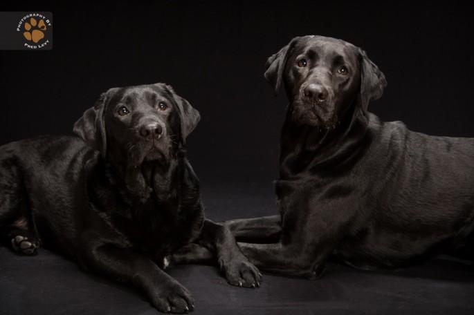 Black Dogs 21