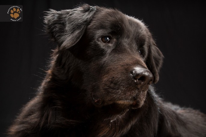 Black Dogs 23