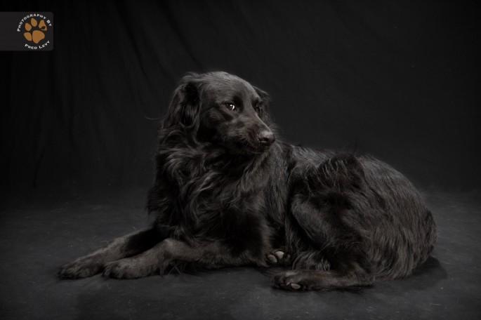 Black Dogs 25