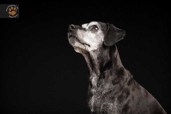 Black Dogs 26