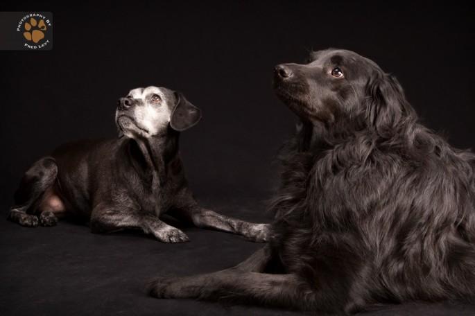 Black Dogs 28