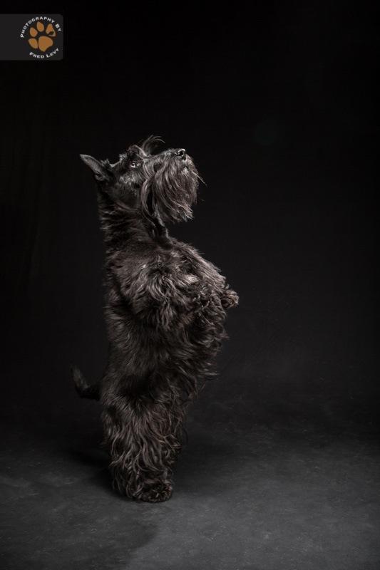 Black Dogs 29