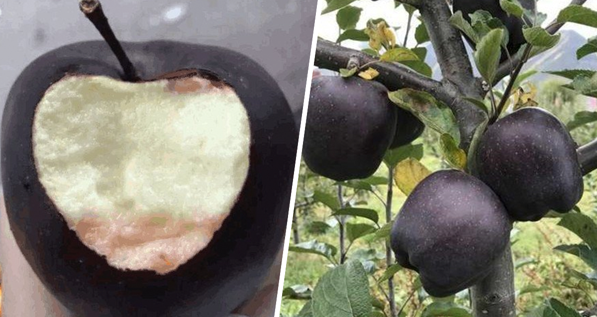 Farmers Are Refusing To Grow These Rare Expensive Black