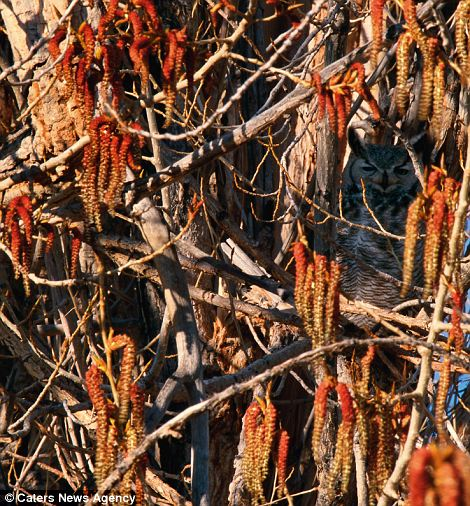 Can You Find The Hidden Animals In These 20 Wildlife Photos 22 Words