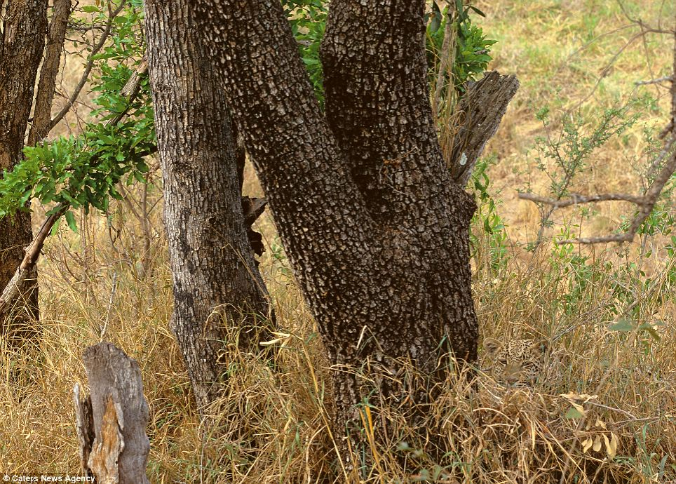 Can you find the hidden animals in these 20 wildlife photos? | 22 Words