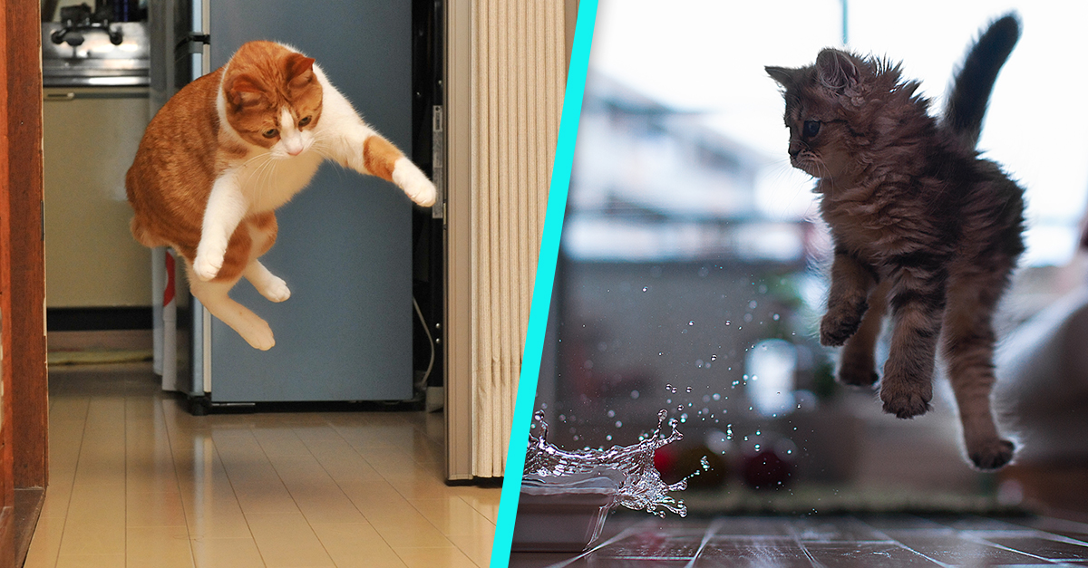 20 Cats Inadvertently Swatting Things Toward Themselves