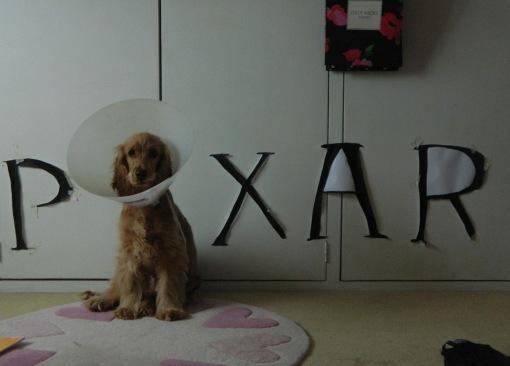 Cone of Shame 14 Pixar