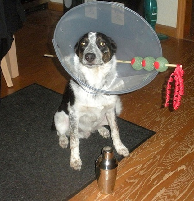 How To Make A Cone Of Shame For Dogs