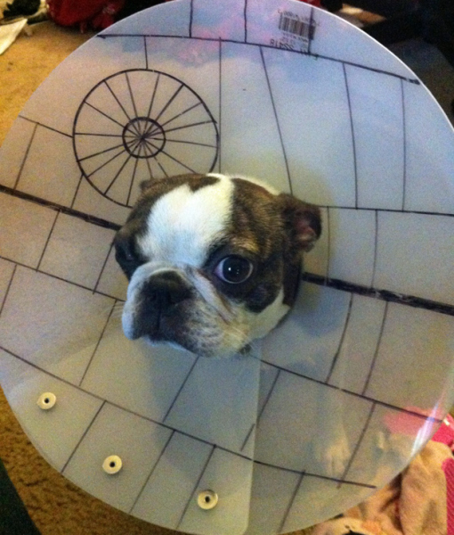 18 People Who Knew Exactly What To Do With Their Dog S