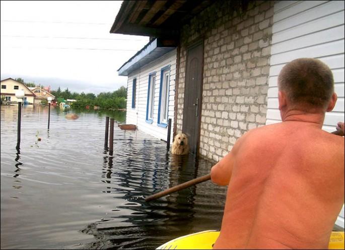 Dog Guards Home Despite Flood - 02