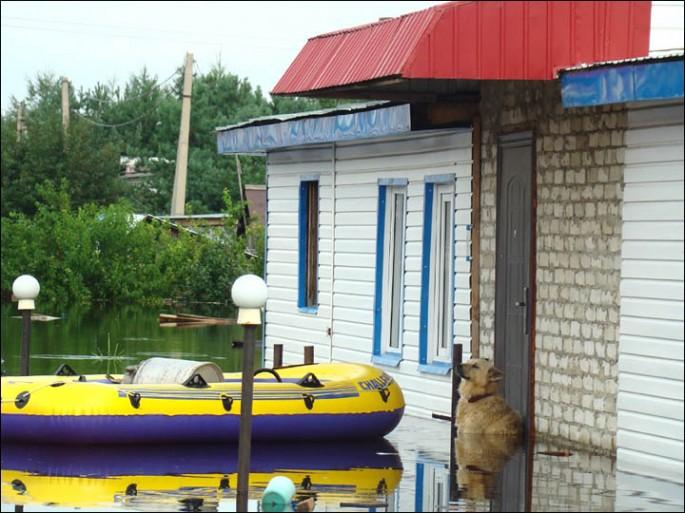 Dog Guards Home Despite Flood - 03