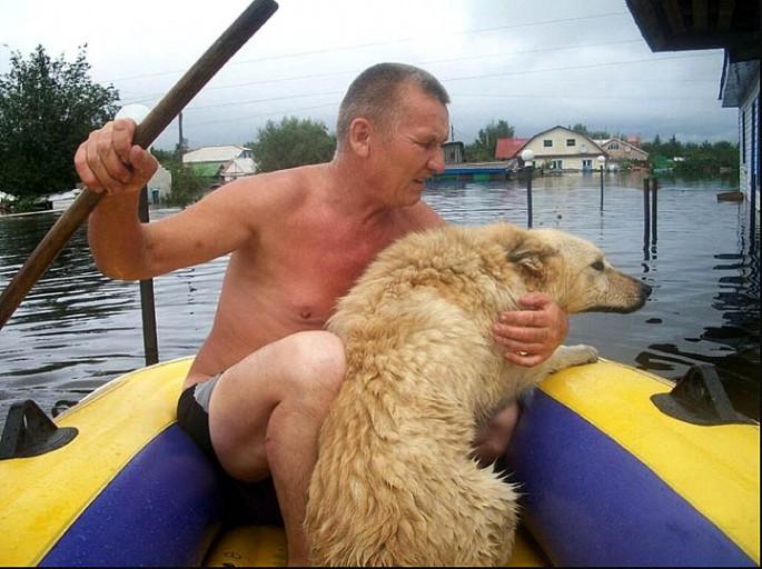 Dog Guards Home Despite Flood - 04