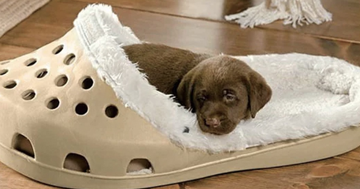 Giant Shoe Beds Exist For Dogs That Love Slippers 22 Words