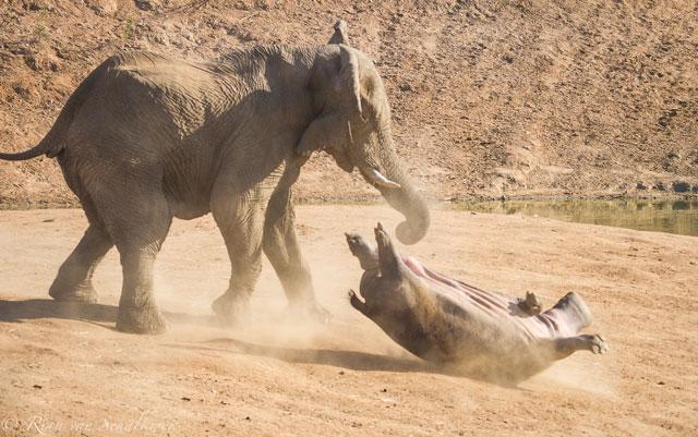 Elephant and Hippo - 03