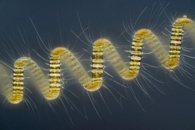 Microscope photos - 01