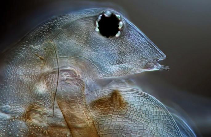 Microscope photos - 07
