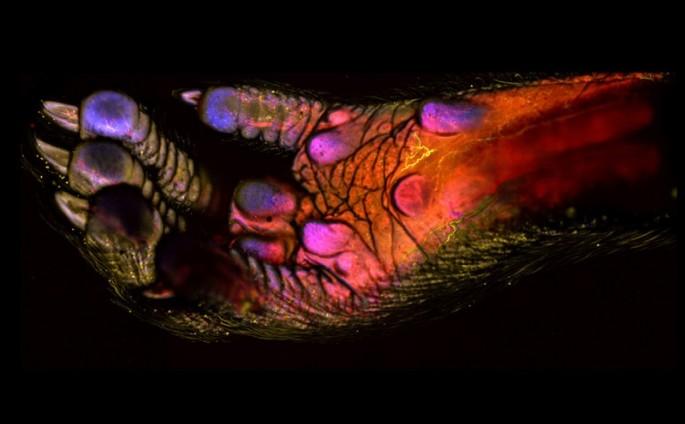 Microscope photos - 11