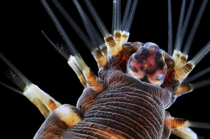 Microscope photos - 12