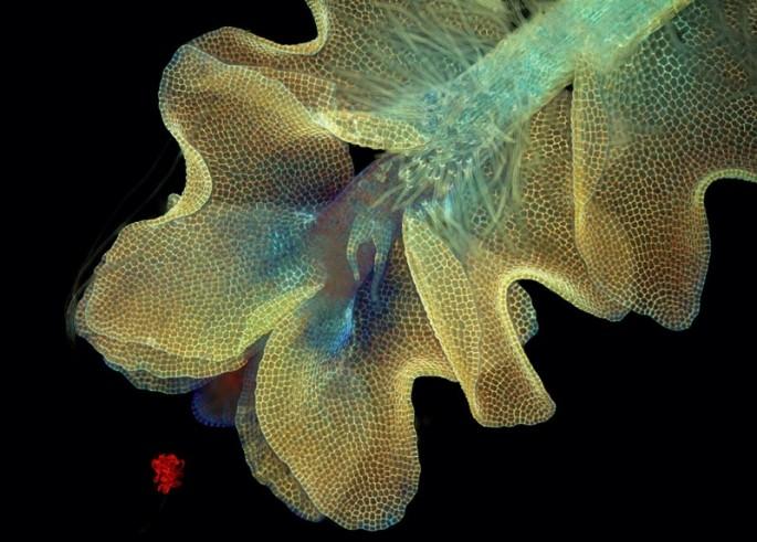 Microscope photos - 15