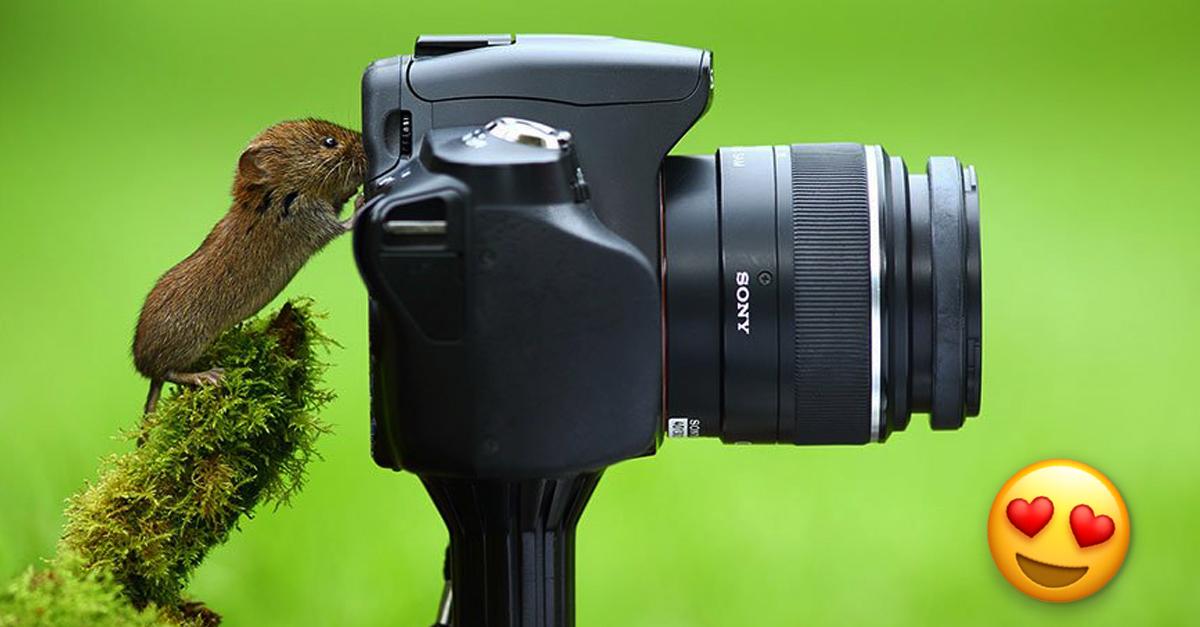 Just A Ton Of Photos Of Animals Interrupting Wildlife