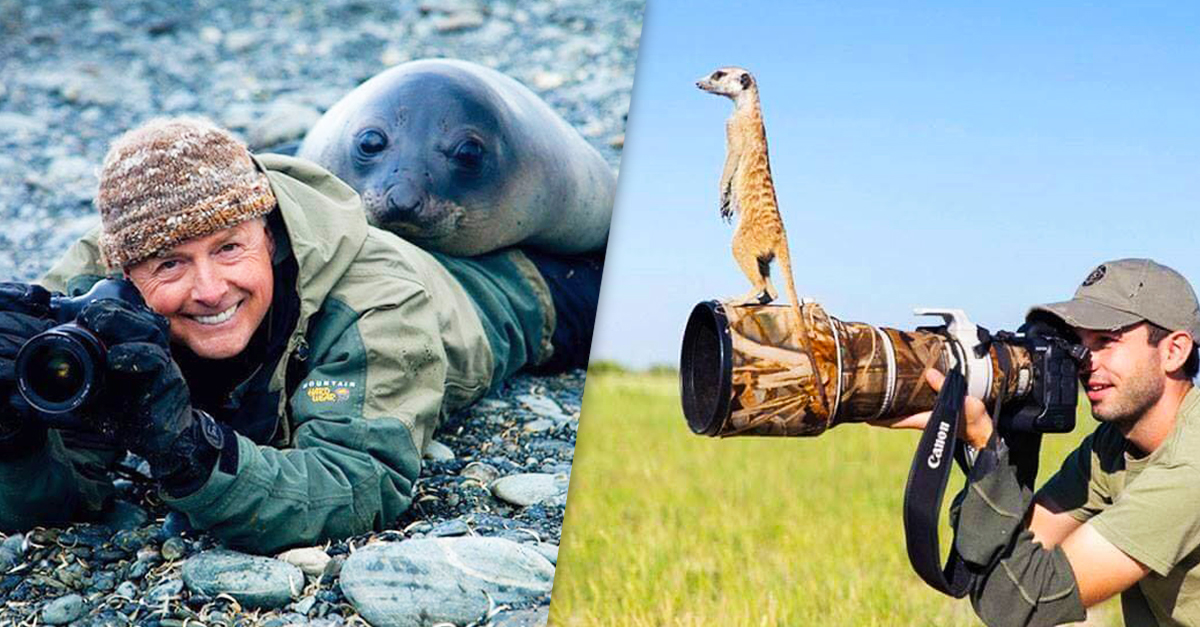 Just A Ton Of Photos Of Animals Interrupting Wildlife