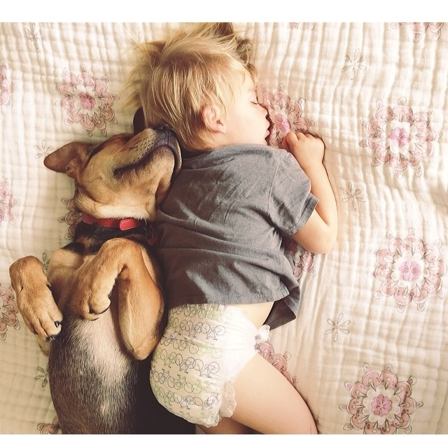 Napping Boy and Puppy 13