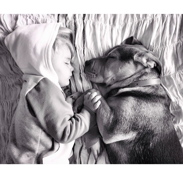 Napping Boy and Puppy 18