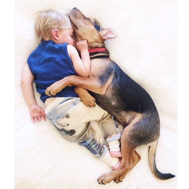 Napping Boy and Puppy 23