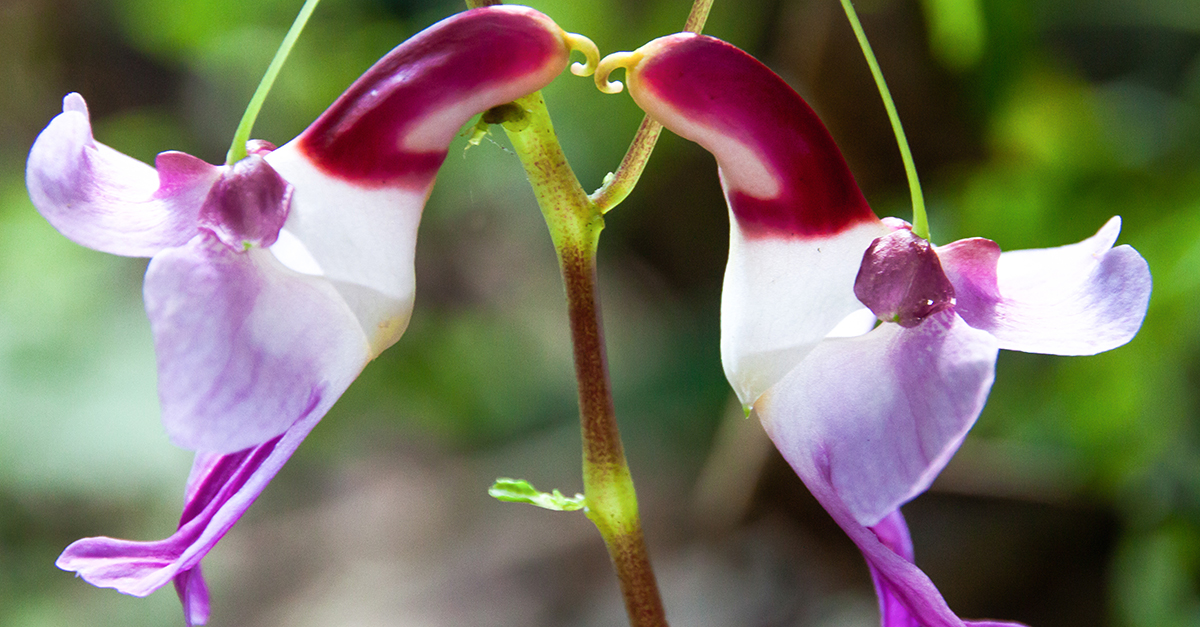 25 of the Most Breathtaking and Dangerous Flowers in the World