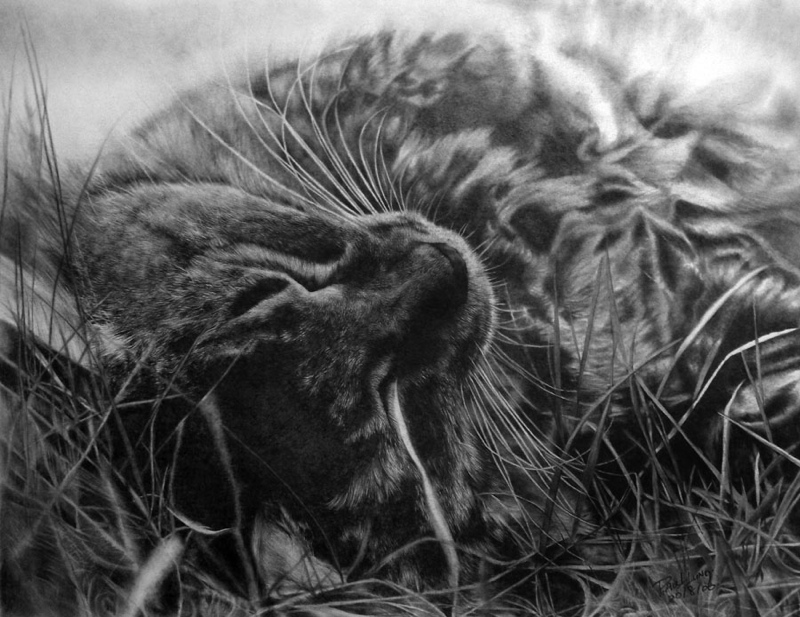 15 Cat Pictures You Won T Believe Are Pencil Drawings 22