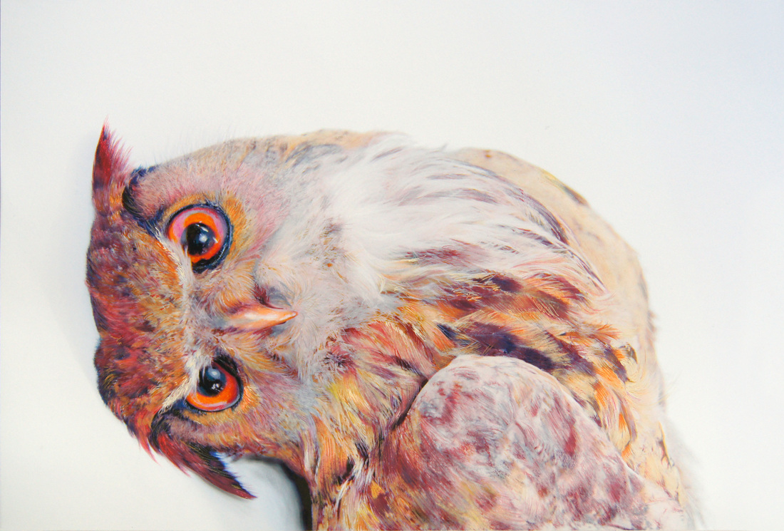pencil pastel and charcoal portraits of owls 9 pictures 22 words