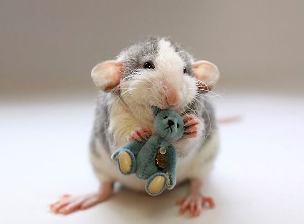 Rats with Teddy Bears 15